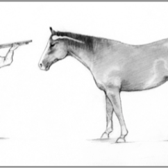 Diagram Of The Left Eye 2006 Honda Accord Radio Wiring Code Practice For Care And Handling Equines