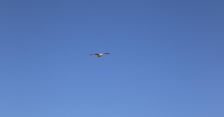 Blauer Himmel - in der Mitte eine Möwe im Flug