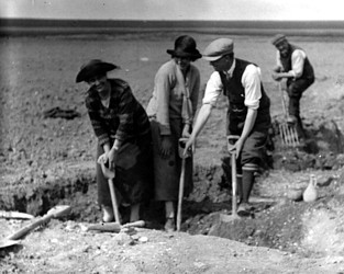 Percival Westell and team digging on Walls Field in the 1920s