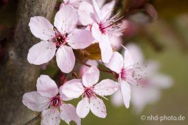 Frühlingsgruß - 4