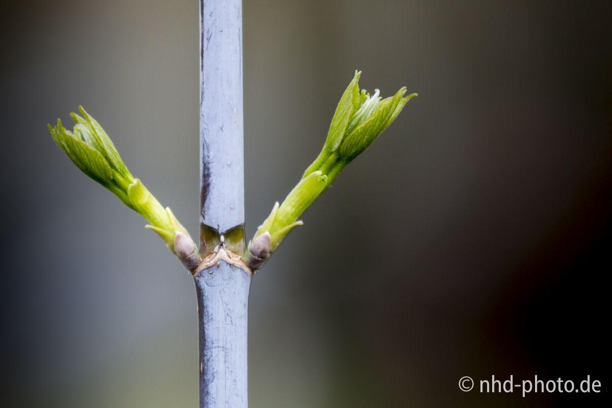 Kostenlose Frühlingsgrüße