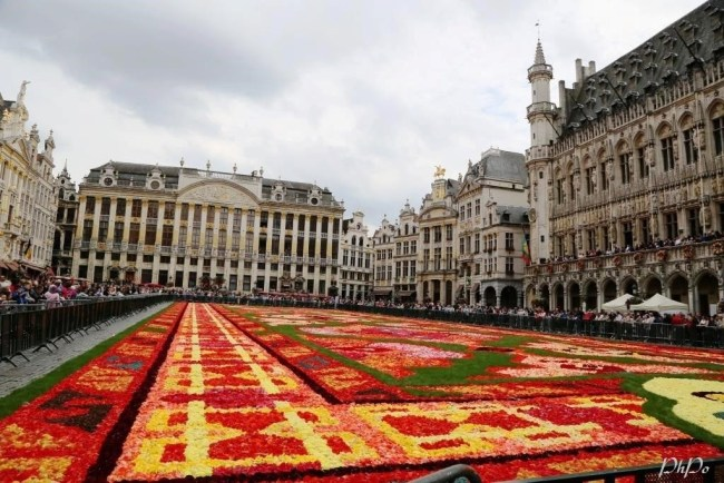 Grand Place - Tapis des fleurs. Photo: PhPo