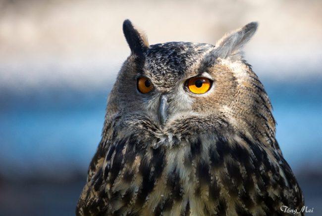 tongmai-2016-conowingo-for-blog-bird-7