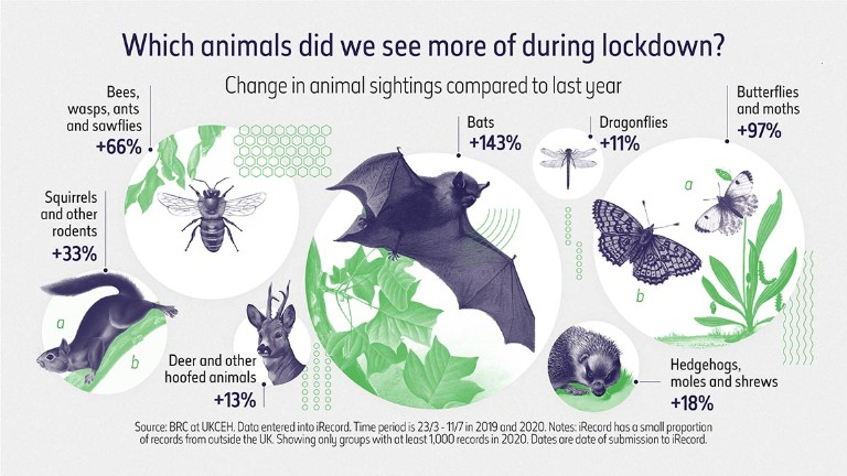 De quels animaux avons-nous le plus vu pendant le verrouillage