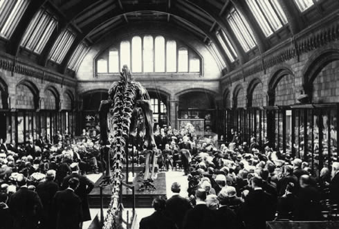 The unveiling of 'Dippy' at the Natural History Museum in 1905