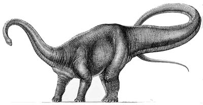 Image result for diplodocus