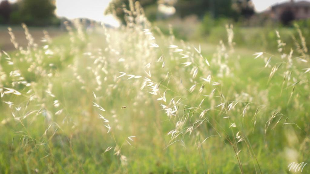 Insetto nell'erba