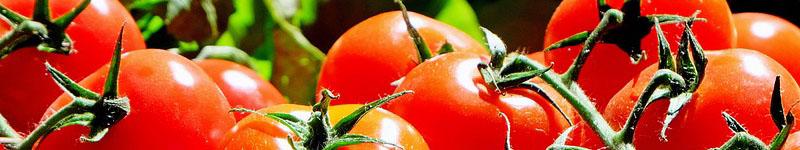 pomodoro, tomato, licopene, prostata