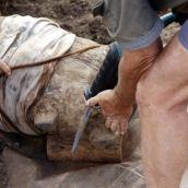 poaching in keya. what a waste cutting away the need to poach rhino