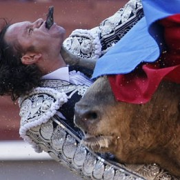 julio- aparicio bull gored matador