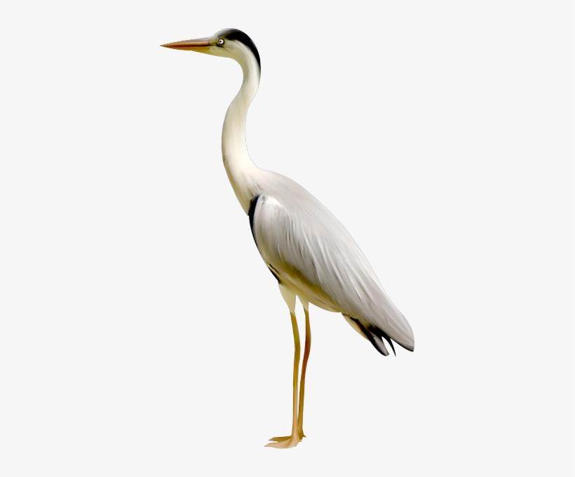 transparent birds crane transparent