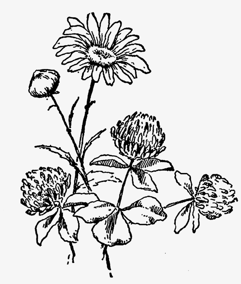 hight resolution of and the second wildflower image of a daisy flower black and white wildflower clipart