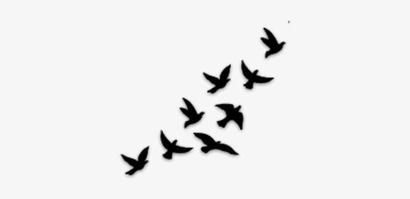 Buscar Con Google Diseños De Aves Para Tatuajes Transparent Png