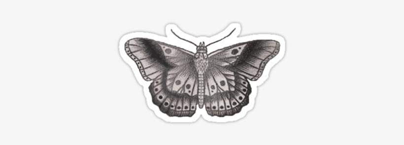 Harry Styles Butterfly Tattoo By Bohemianmermaid Tatuajes De