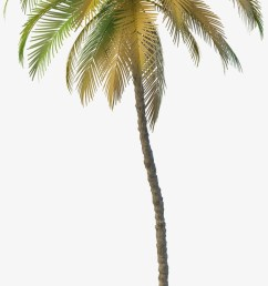 clipart resolution 2000 2000 coconut tree png free download [ 820 x 1806 Pixel ]
