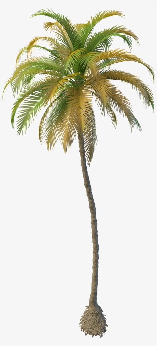 small resolution of clipart resolution 2000 2000 coconut tree png free download
