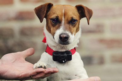 chien collier anti fugue