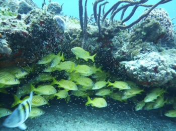 Cozumel - some of the world's best scuba diving