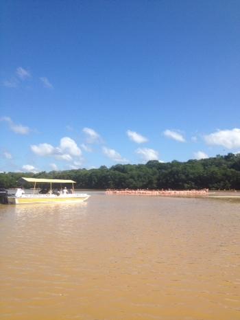 Flamingos and mangroves at Celestun