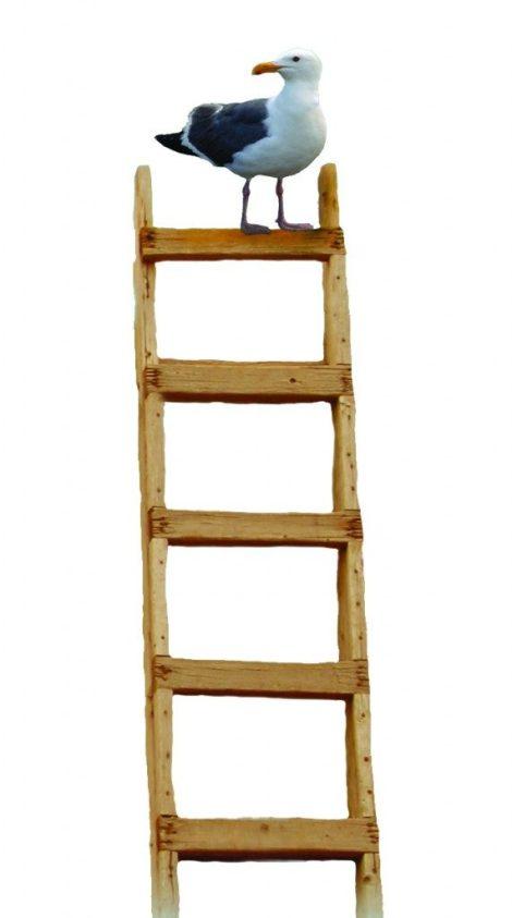 bird-on-ladder-571x1024