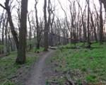 Waldweg zum Cobenzl