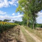 Wanderweg nach Sierndorf