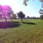 Wiese am Golfplatz