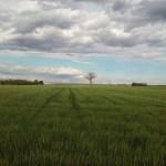 Baum unter Wolken