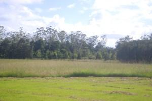 Bill O'Donnell's property today, near Bundagen, Coffs Coast, NSW