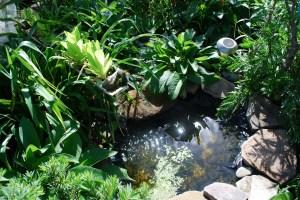 aquaponics 3