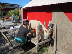 Nicky milking one of her goats, VK Urban Farms, Southside Chicago