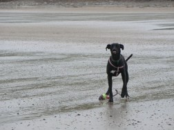 Nelson on Bridlington Beach