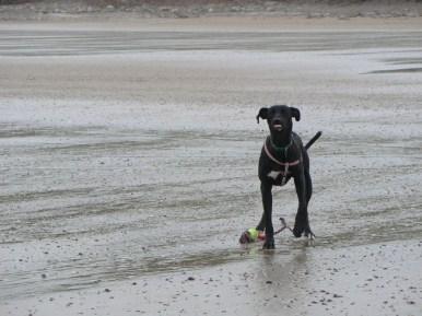 Nelson on Bridlington Beach