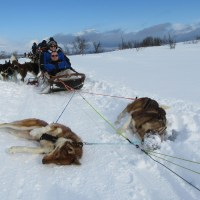 Mush! Husky Sledding in Tromso