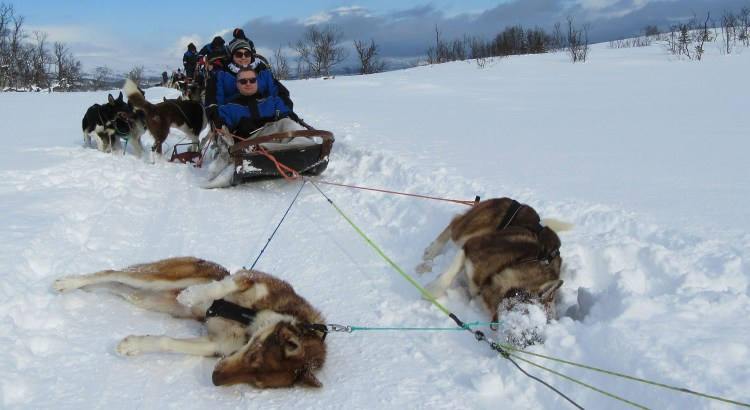 Tromso dog sledding
