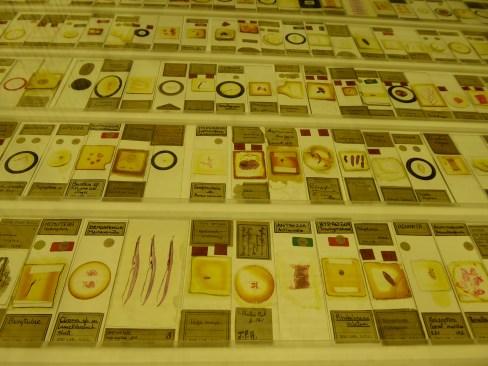 Micrarium slides at Grant Museum of Zoology