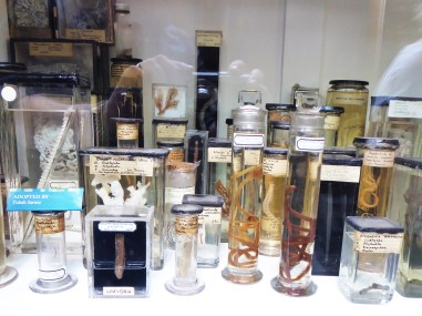 A selection of preserved worms