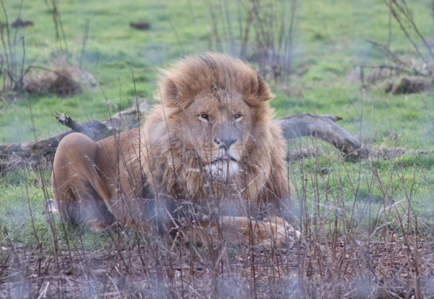 A Wintry Wander at Yorkshire Wildlife Park