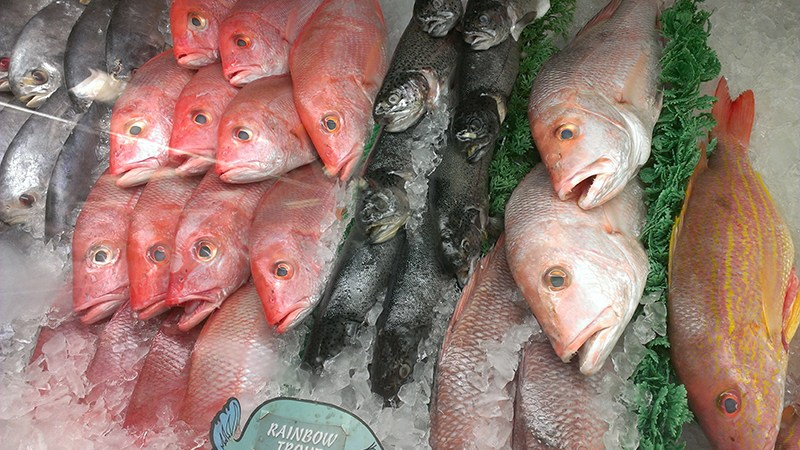 Red Snapper and Trout