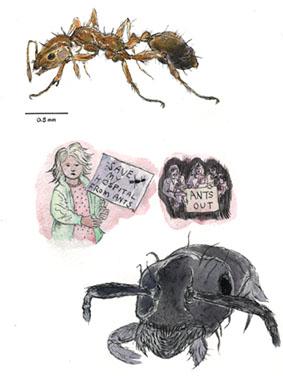 Alien Invaders, Pharaoh Ant
