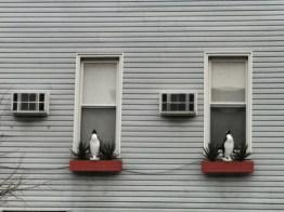 penguin perch