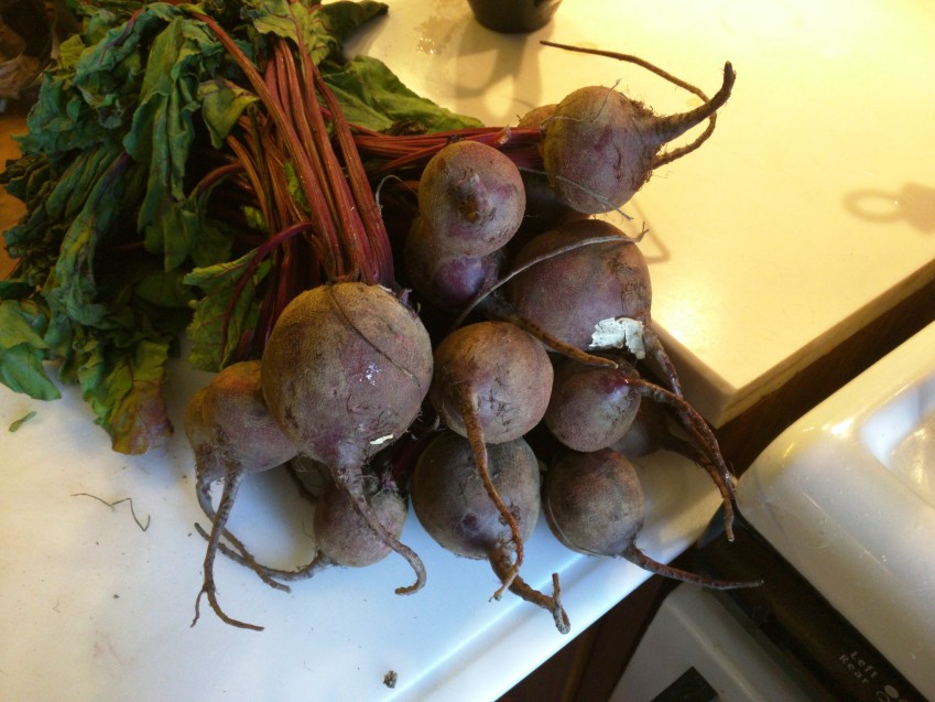 "These organic CSA beets average about 1""-2"" in diameter; this many beets will produce a good 3 pint jars worth of canned beets."