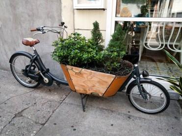 expensive planter