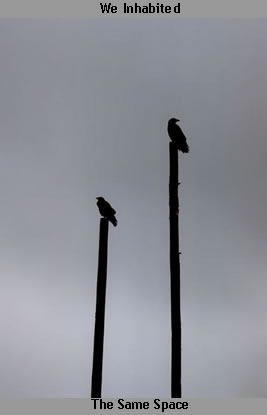 2crows
