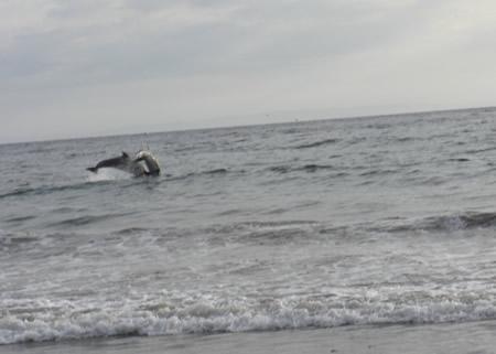 dophinsjump1