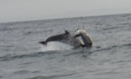 dophinsjump2