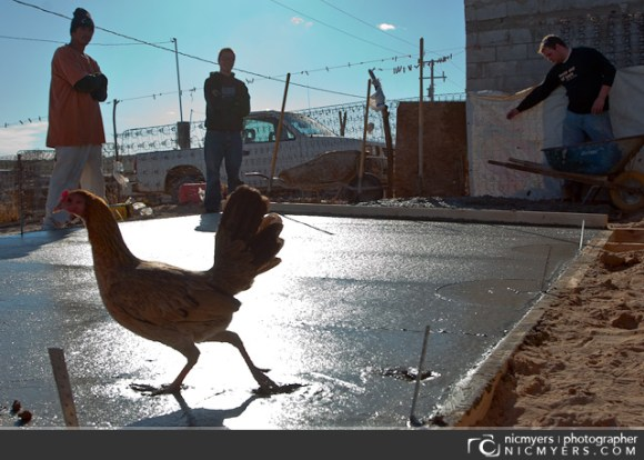 Juarez, Mexico. Chickens and concrete.