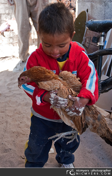 Juarez, Mexico. Chicken rescue..