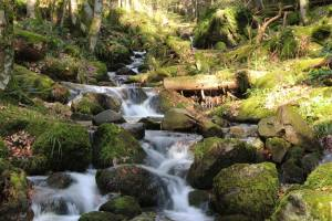 small-waterfall-in-the-vosges-mountains