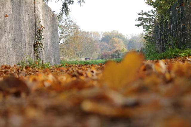vue-de-la-terre-couverte-de-feuilles-en-automne